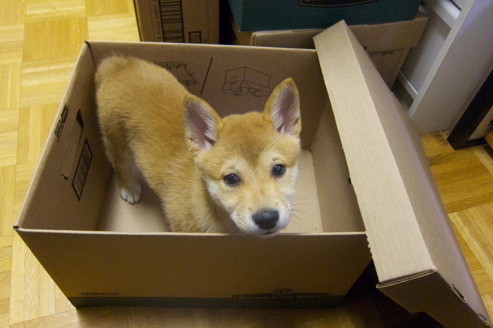 (你得问:可选类型的盒子里面是啥?)
